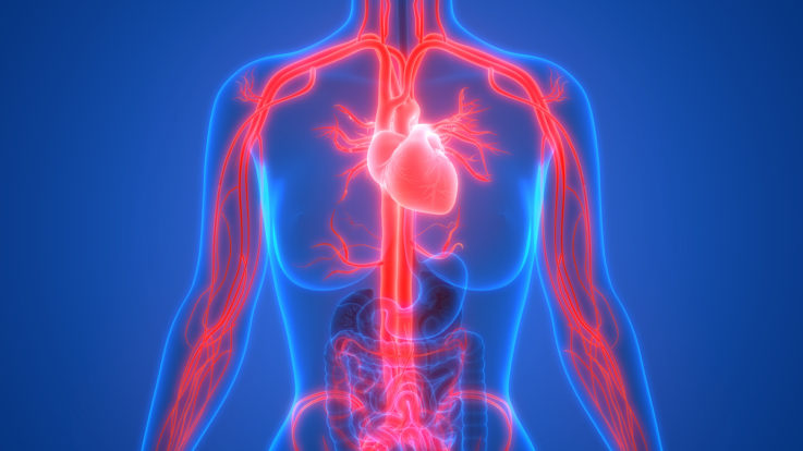 Fun Facts That May Surprise You About Our Amazing Circulatory System